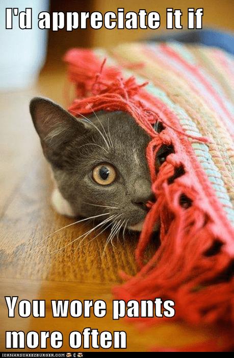 pants kitten - 7604575488