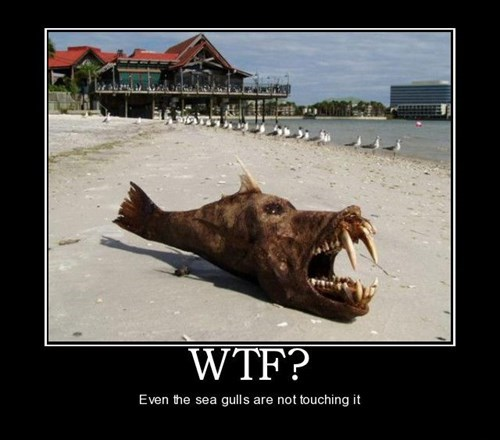 horrible wtf fish funny