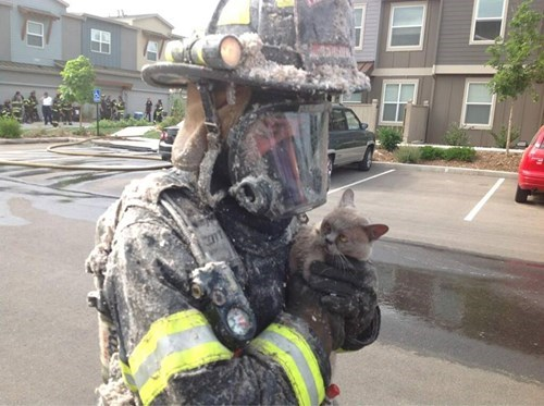 random act of kindness fire fighter restoring faith in humanity week BAMF Cats funny - 7604755712