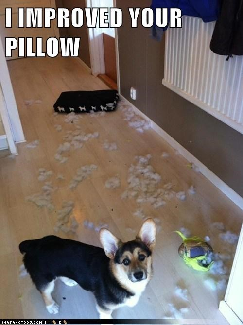Pillow,destructive,stuffing,funny