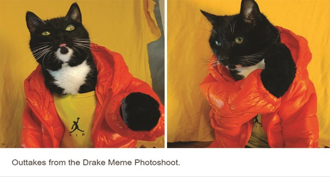 cat dressing up cosplay tumblr