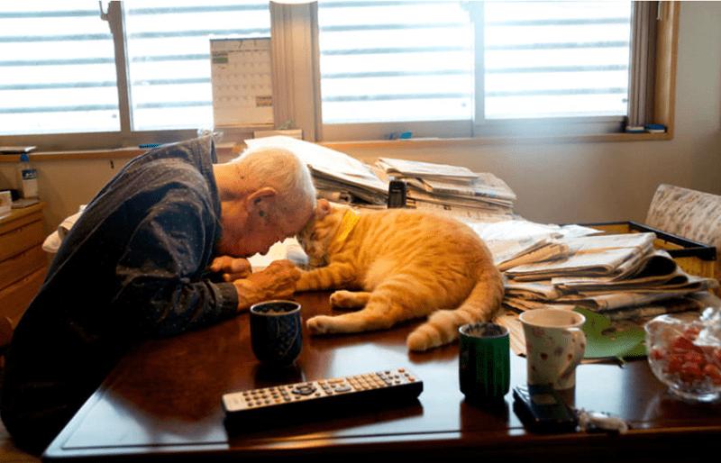 Grumpy Cat grumpy love Grandpa grandaughter Cats - 7606277