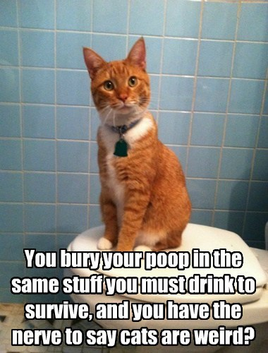 You bury your poop in the same stuff you must drink to survive, and you have the nerve to say cats are weird?
