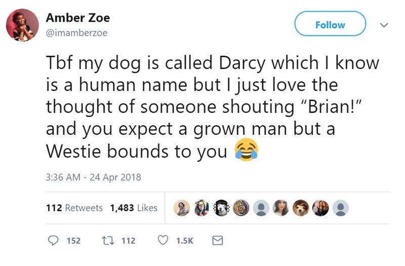 pets human names funny tweets - 7606789
