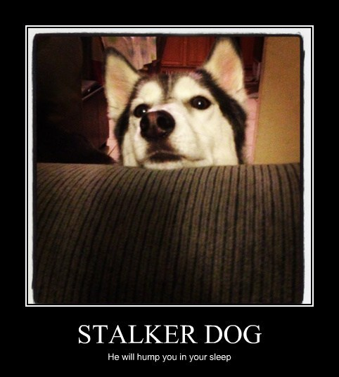 STALKER DOG He will hump you in your sleep