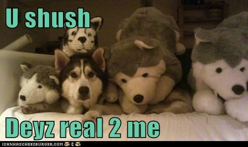real stuffed animals funny