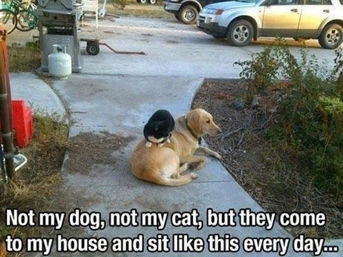 dogs neighbors Cats funny - 7607627008