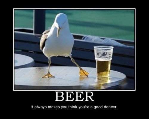 beer dance seagull funny - 7607765760