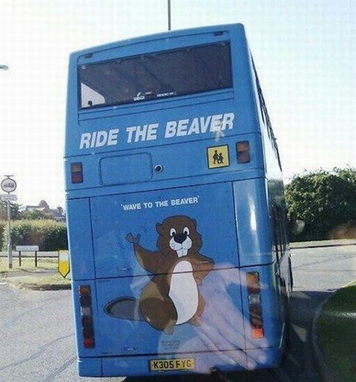 Picture of a large beaver painted on the side of a bus with a sign saying 'ride the beaver' - clearly someone misunderstood or is trying to be cheeky.