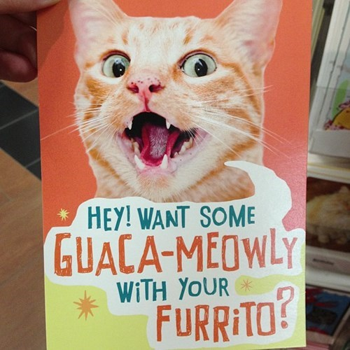 greeting cards puns purrito Cats funny - 7608136704