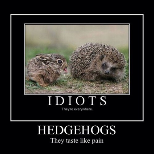 taste,hedgehog,bunny,funny,animals