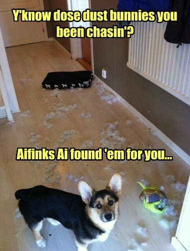 dust bunnies,destructive,funny,corgis