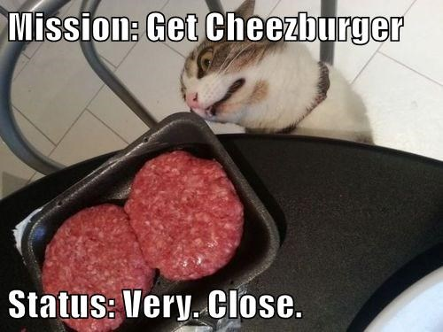 Cheezburger Image 7608643072