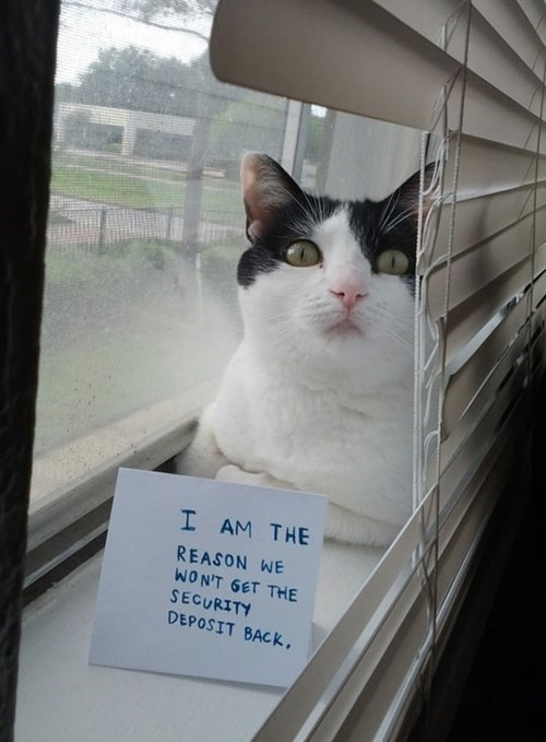 deposit cat shaming renting funny