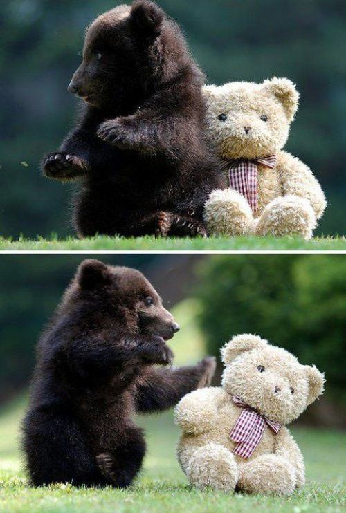 teddy bear,baby,cubs,push
