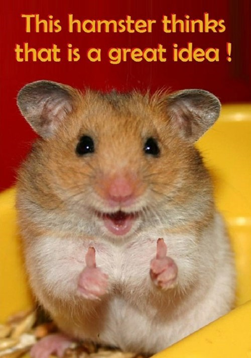 good idea two thumbs up hamster funny - 7610646016