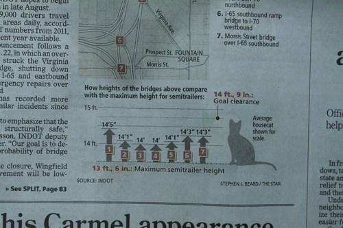 Chart Cats funny newspaper - 7611067904