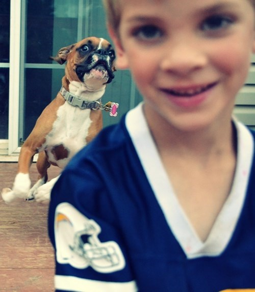 dramatic dog photobomb dogs funny - 7611254016