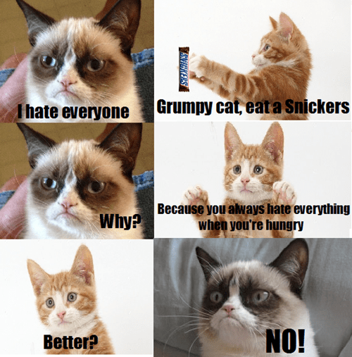 Grumpy Cat Memes snickers Cats animals