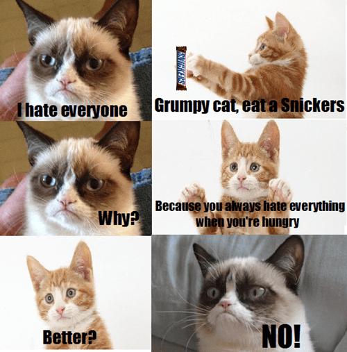 Grumpy Cat Memes snickers Cats animals - 7611543296