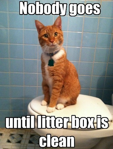 Nobody goes until litter box is clean