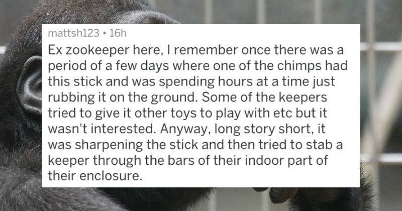 people who work at zoos tell stories about animals