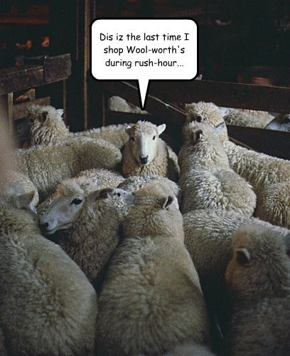 shear,rush hour,sheep,funny