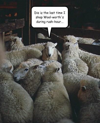 shear rush hour sheep funny - 7612682240