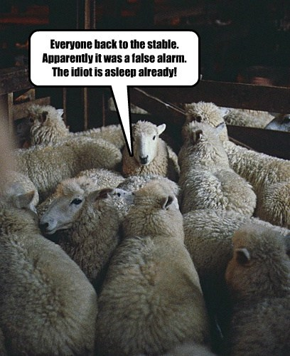 false alarm,counting sheep,funny