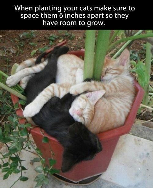gardening,nap,funny