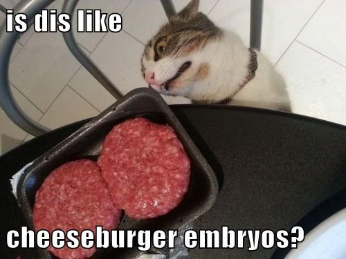 Cheezburger Image 7613263616