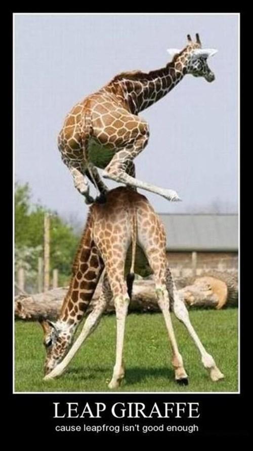 giraffes funny leap frog - 7613376256