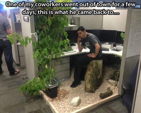 cubicles,office prank,zen,monday thru friday,g rated