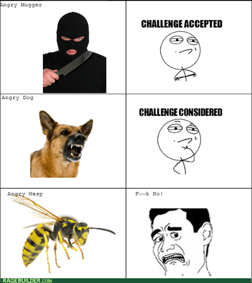 wasps muggers dogs Challenge Accepted robbers bees challenge considered - 7613517312