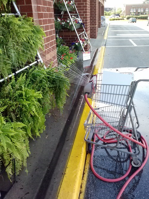 watering the plants,shopping carts,sprinklers,funny