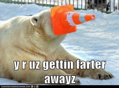 cone polar bear funny - 7613797888