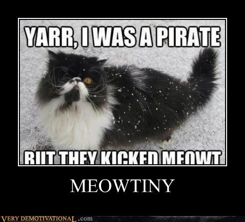 cat puns Pirate funny