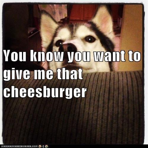 Cheezburger Image 7614002944