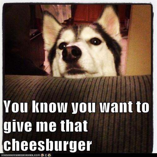 Cheezburger Image 7614004992