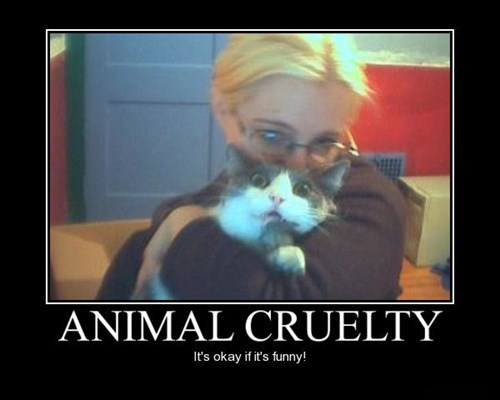 hate cat cruelty funny animals - 7614039296