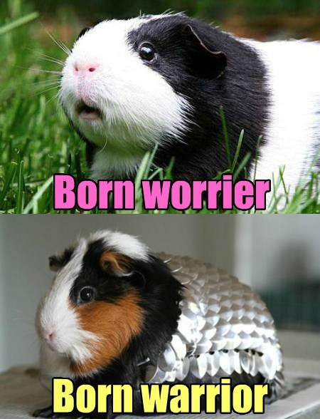 guinea pigs puns critters funny - 7614055680