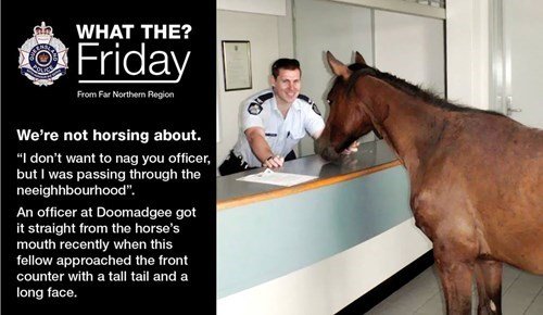 puns horses funny police queensland - 7614187264