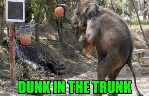 nba elephant basketball funny - 7614389760