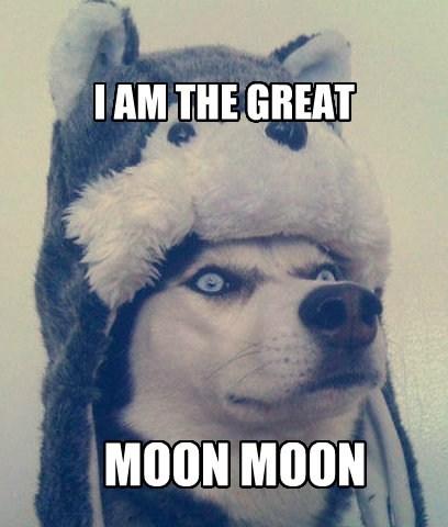 husky moon moon hat funny - 7615683840