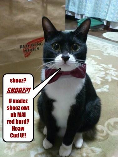 shooz? U madez shooz owt ub MAI red burd? Hoaw Cud U!! SHOOZ?!