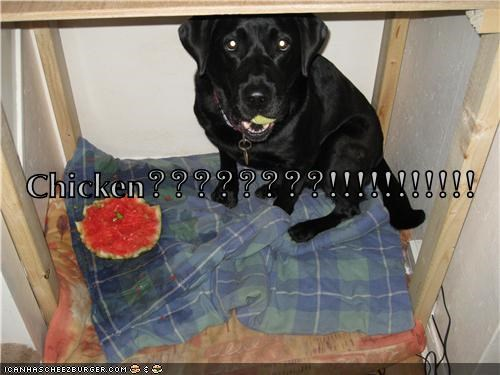 Cheezburger Image 7618515456