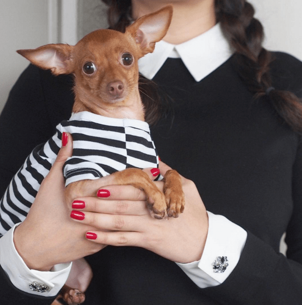dogs fashion walter instagram chihuahua - 761861