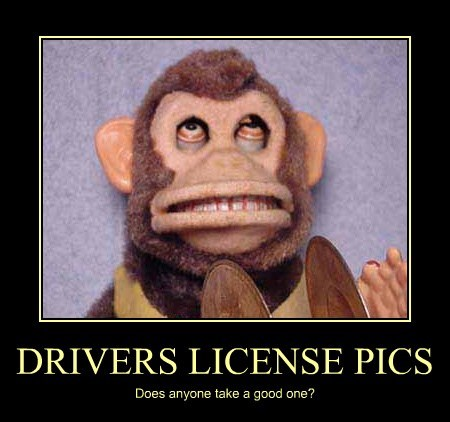 pictures monkey funny drivers license
