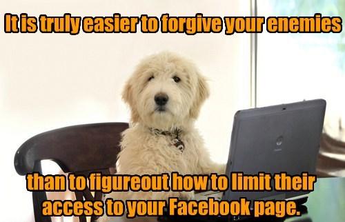 enemies facebook wise dogs - 7619154944