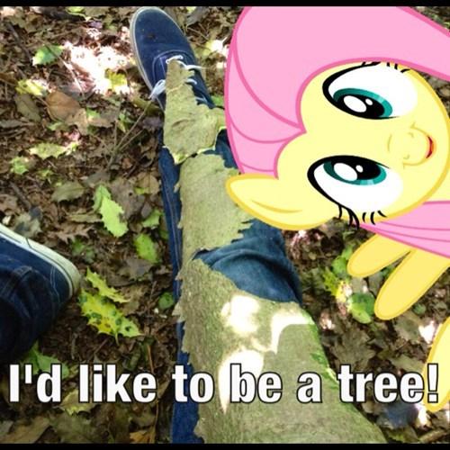 trees IRL fluttershy - 7619668480
